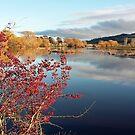 Macquarie River in Ross Tas by Wendy Dyer