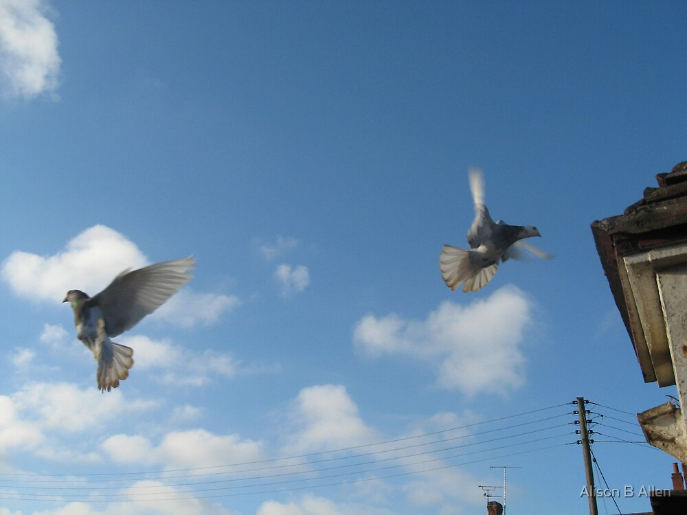 In Flight (Medborne Leicestershire UK Dec 2008) by fatchickengirl