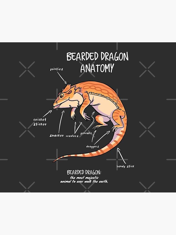 bearded dragon anatomy by AnimalArtist
