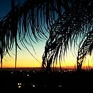 Palm Tree Sunset  by laruecherie