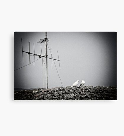 Small talk on the rooftop Canvas Print