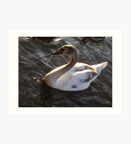 H R H`s Swan Art Print