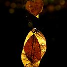 Golden leaves by Isard