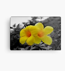 Touch of Color Metal Print