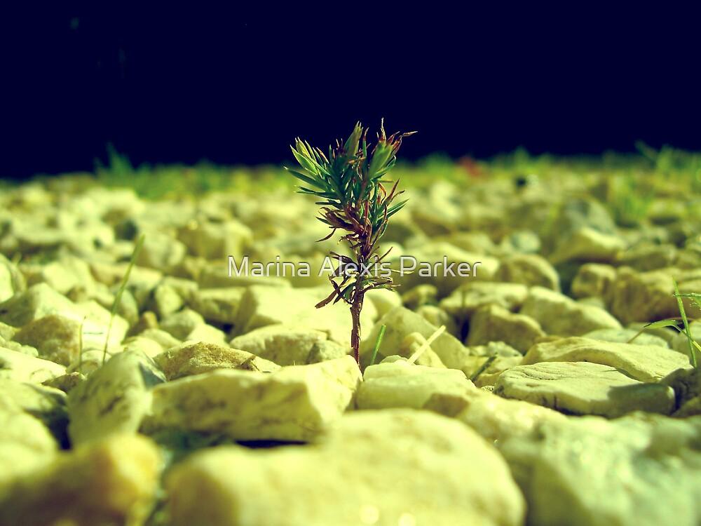 Tree From Rocks by Marina Alexis Parker