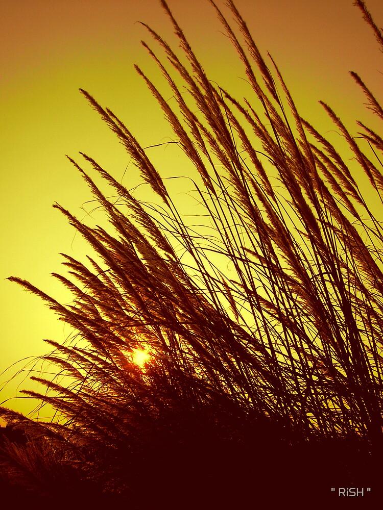 "Sun Strokes by "" RiSH """