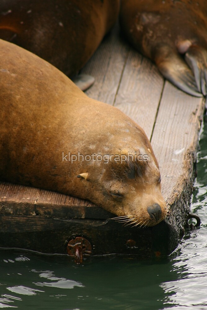 Sleeping seal by klphotographics