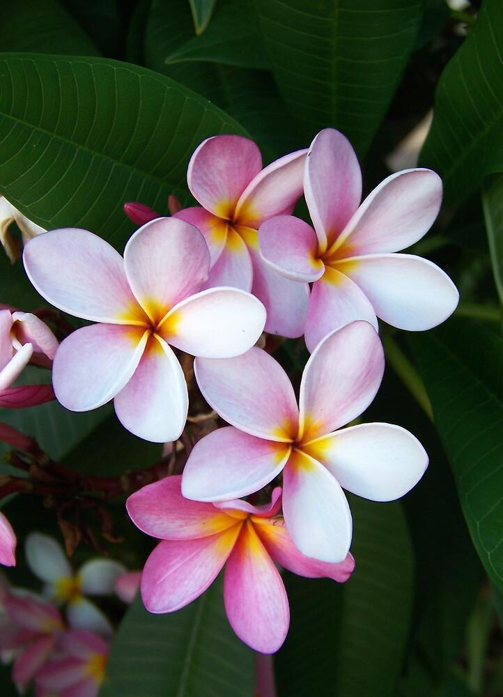 Aloha by KylieB