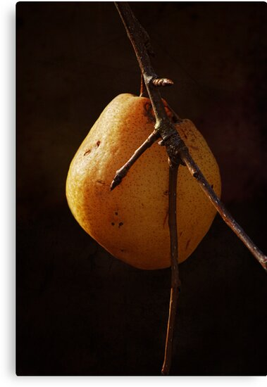 One Last Pear by Kathy Nairn