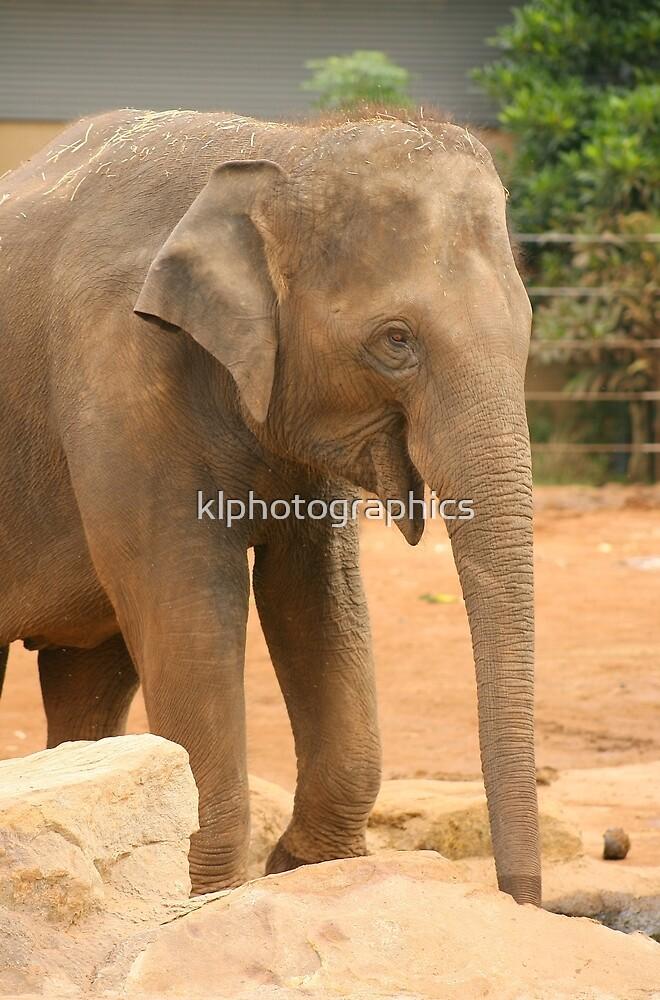 Asian Elephant by klphotographics