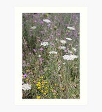 Mackinac Island Wildflowers Art Print
