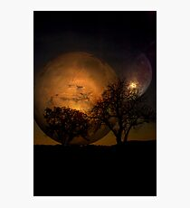 Two Trees Photographic Print