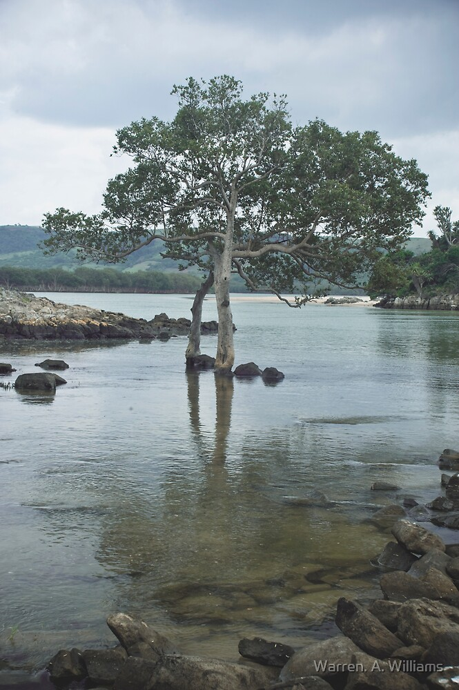 Salt Water Tree. by Warren. A. Williams