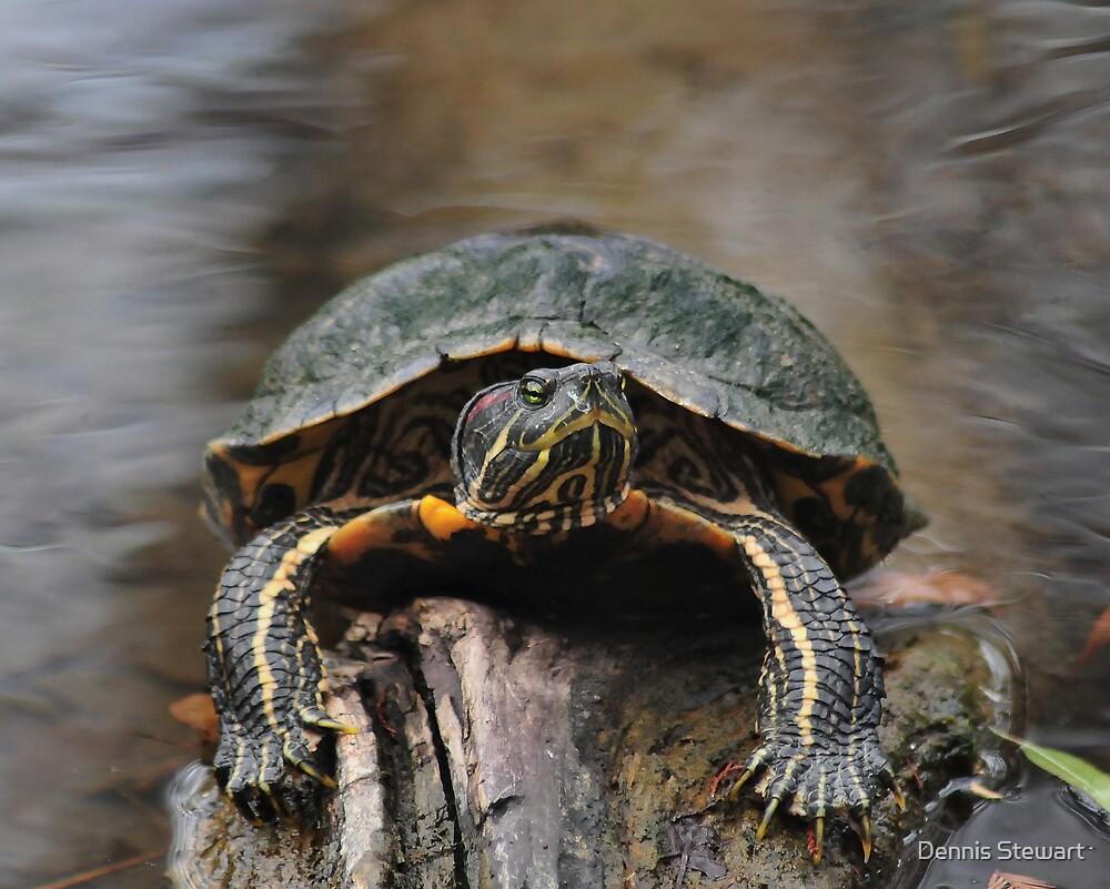 Turtle Grip by Dennis Stewart