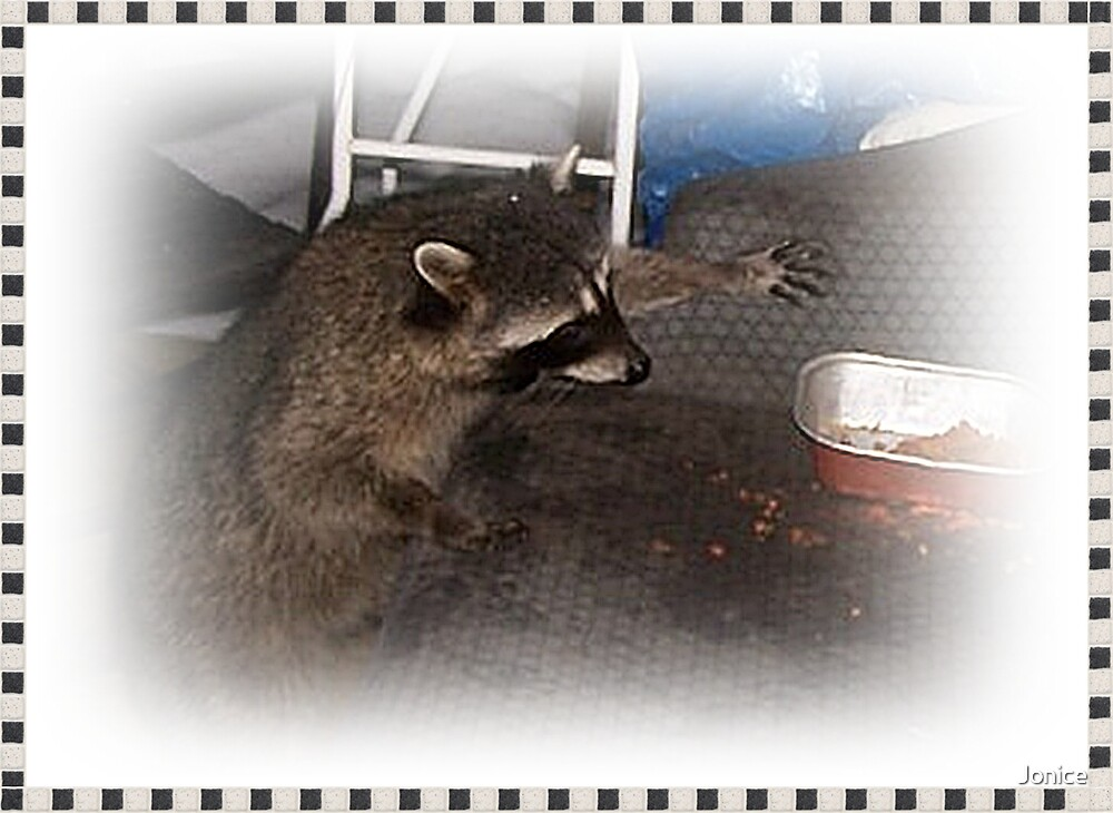 Our Nighttime Visitor The Raccoon by Jonice