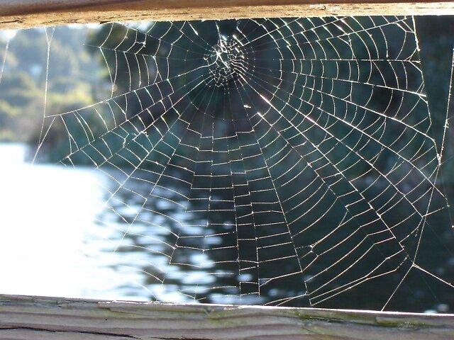 Web Sight by clou