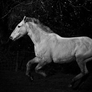 Galloping Horse by SideoftheAngels