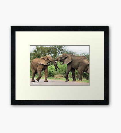 INTERACTION - THE AFRICAN ELEPHANT – Loxodonta Africana - Afrika Olifant Framed Print