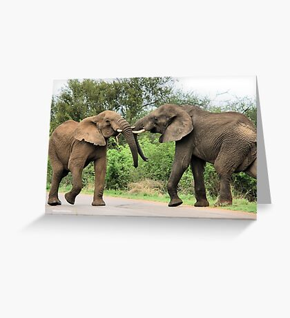 INTERACTION - THE AFRICAN ELEPHANT – Loxodonta Africana - Afrika Olifant Greeting Card
