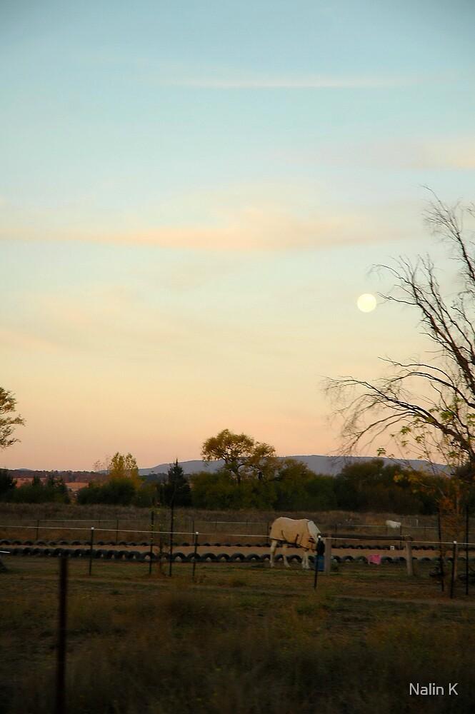 Moon Light by Nalin K