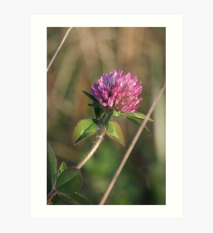 Clover - Purple Art Print