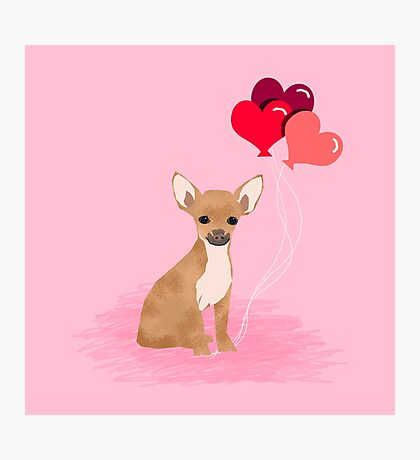 Chihuahua valentines day love hearts dog breed gifts cute chiwawa balloons pure breed Photographic Print