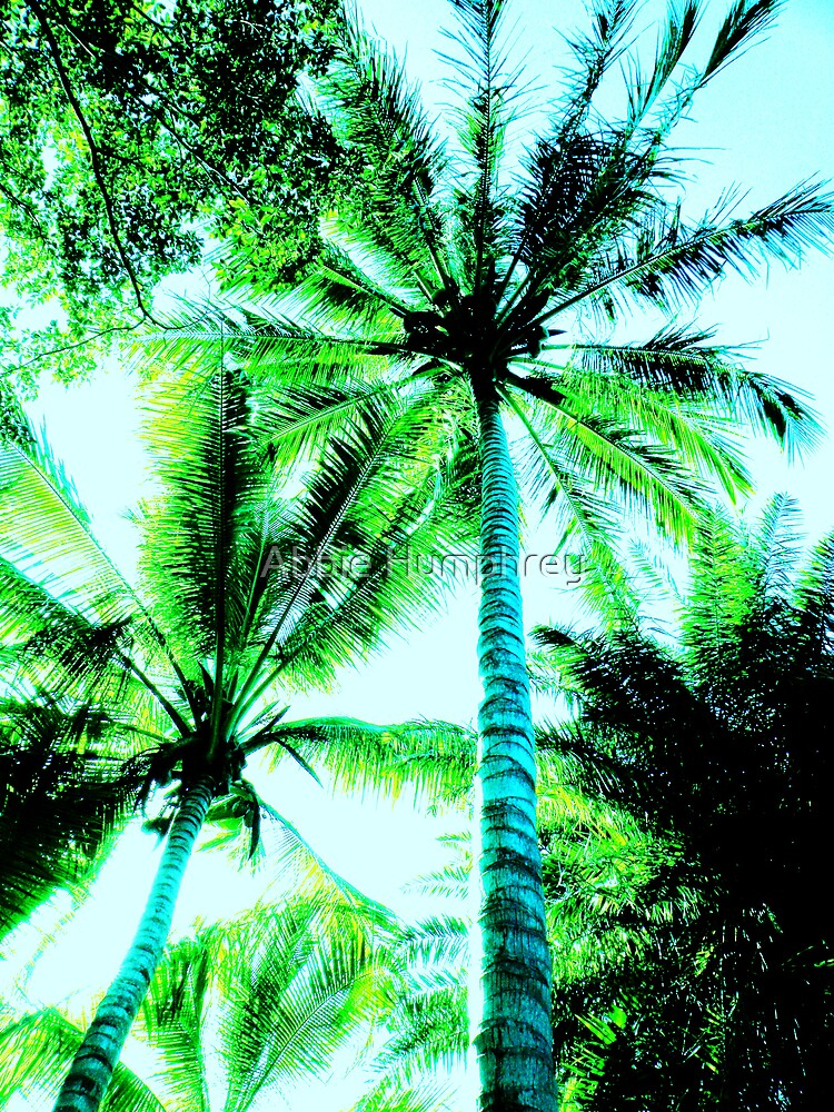 palm trees nature green by Abbie Humphrey