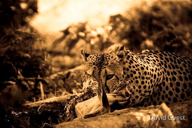 Cheetah Kill by David Guest