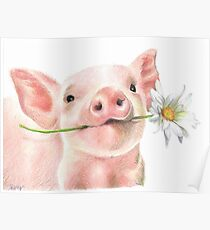 Cute Baby Pig with Daisy Flower Poster