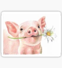 Cute Baby Pig with Daisy Flower Sticker