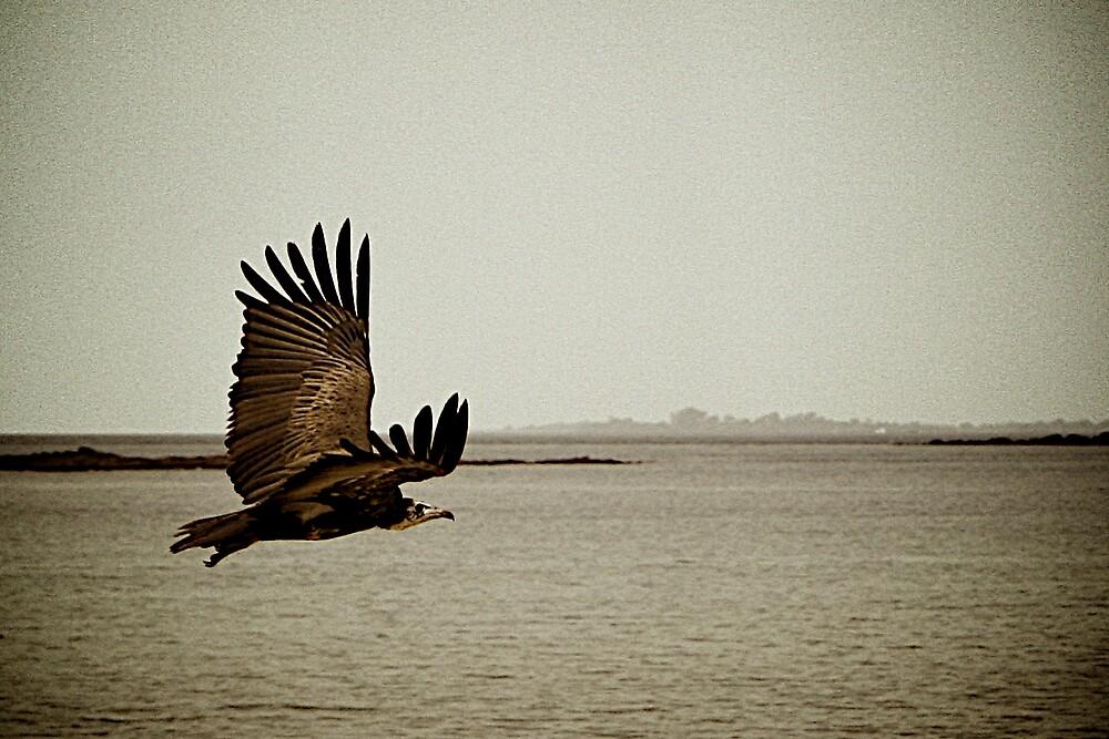 Vulture by SenegalSean