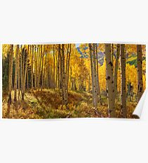 Autumn Aspen Forest Aspen Colorado Panorama Poster