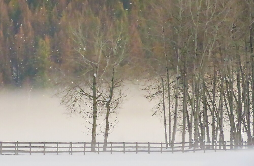 Winter fog and fence by Linda Sparks