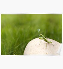 Insect macro Poster