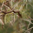 thorns in Jerusalem 2 by Bernard Raskin