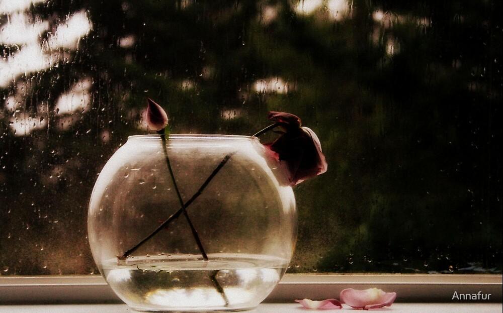 Rain rose  by Annafur