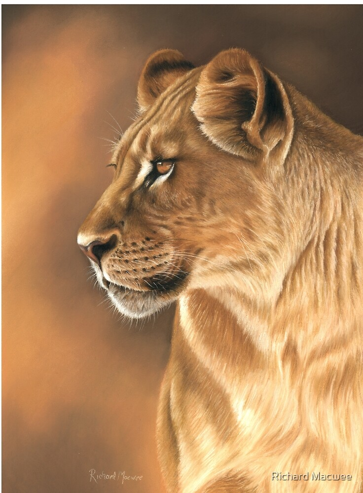 Lioness by Richard Macwee