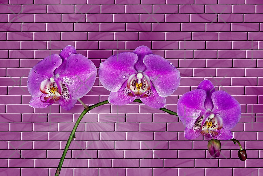 Against The Wall by Maria Dryfhout