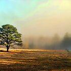 Fog almost gone! by Jason  Burris