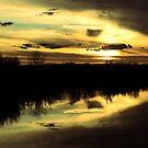 Sunset along the Sacramento by Barbara  Brown