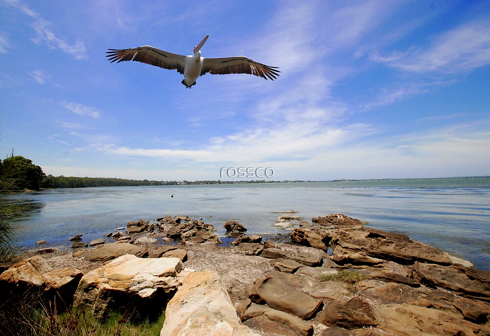 Up Up and Away by rossco