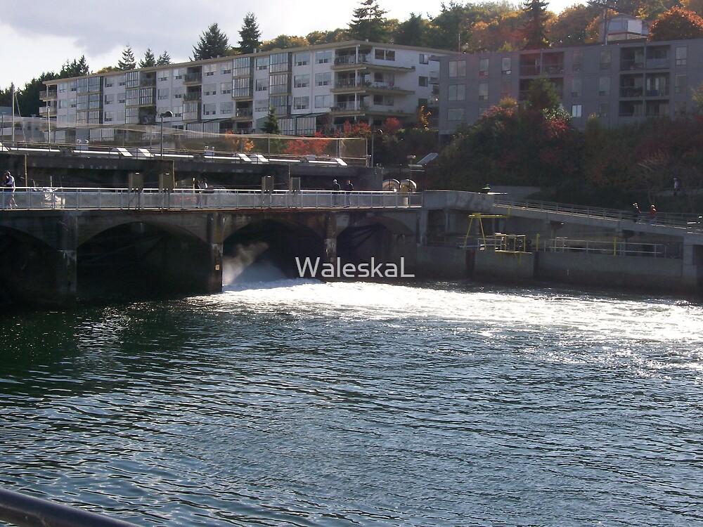 Salmon Crossing by WaleskaL