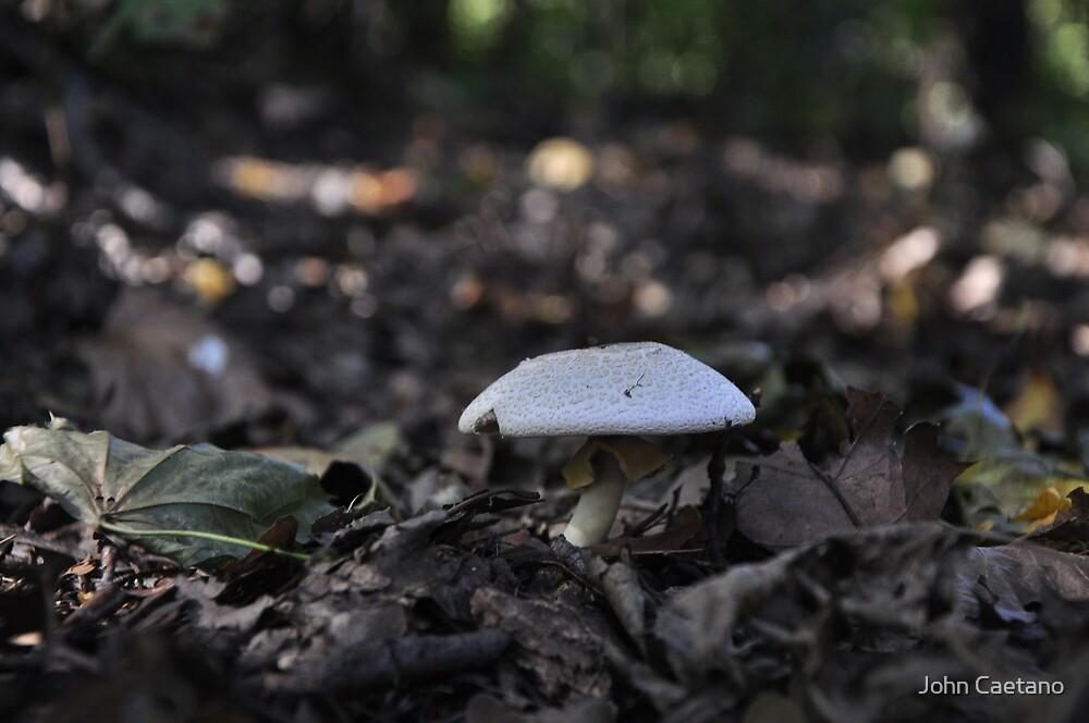 Mushroom by John Caetano