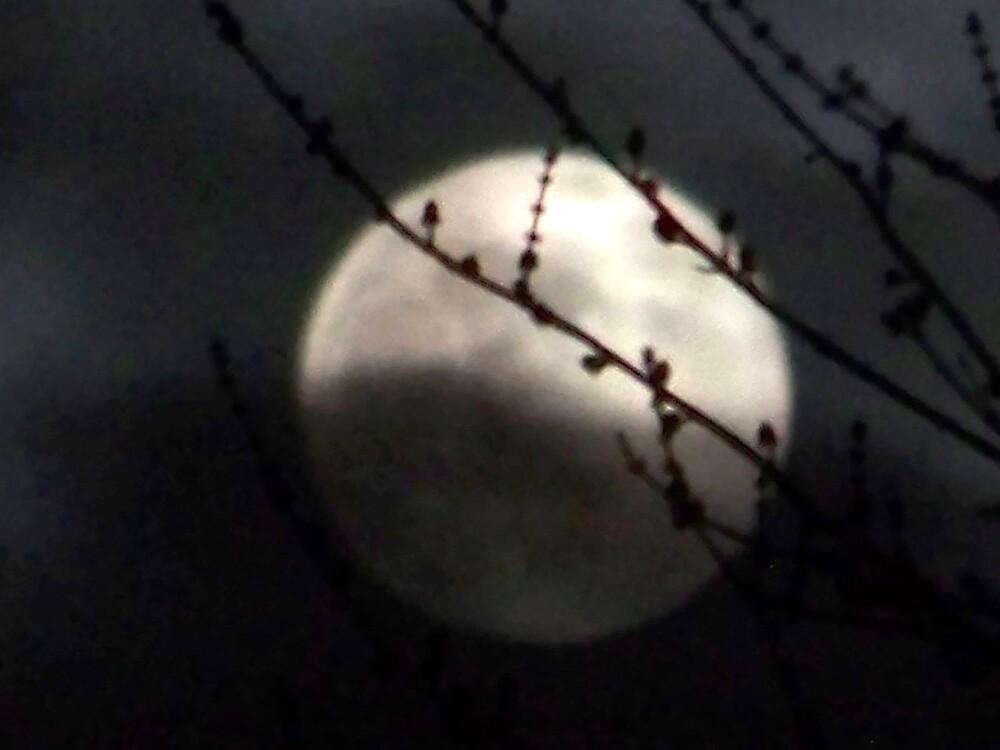 December Full moon by Mindy Miller