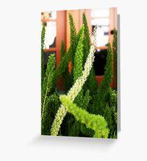 Asparagus ferns Greeting Card