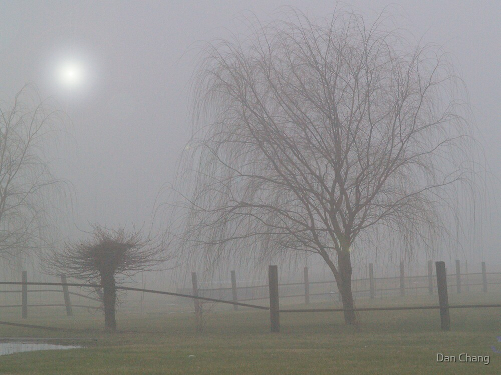 foggy in winter  by Dan Chang