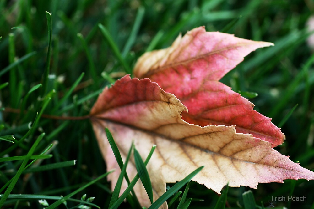 First leaves of Autumn by Trish Peach