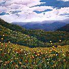 'Wonder of Wildflowers, Mt Buller' by Helen Miles