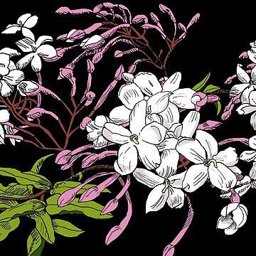 Jasmine by vian
