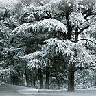Snow Covered Conifer by Jessica Jenney